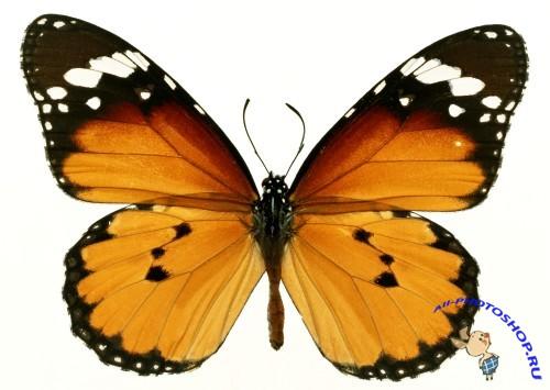 Шаблоны фоны с бабочками