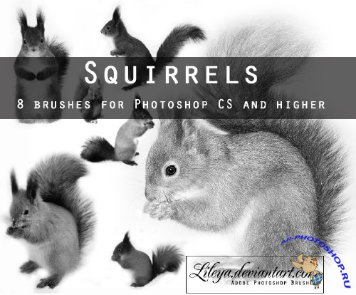 Squirrels Photoshop Brushes