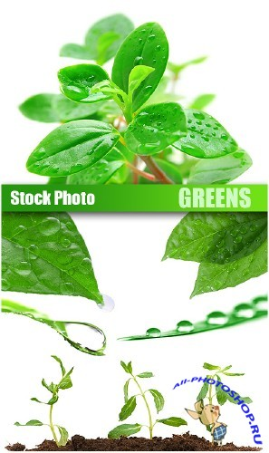 Stock Photo - Greens