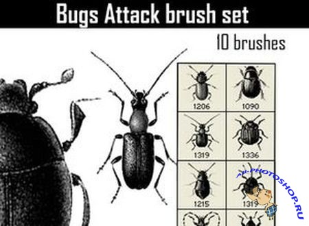 Кисти для Photoshop (Bugs Attack Brushes)