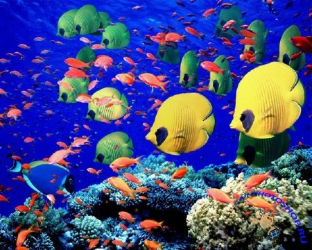 Wallpapers - Underwater world