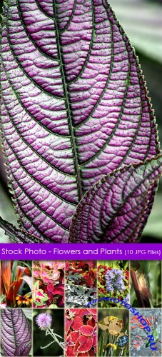 Stock Photo - Flowers and Plants