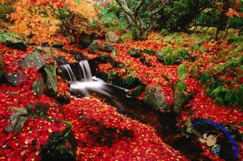 Featured Desktop HD Wallpapers 30 Autumn