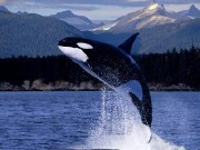 Ocean Life wallpapers HD #1