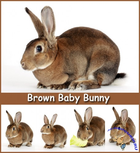 Brown Baby Bunny - Stock Photos