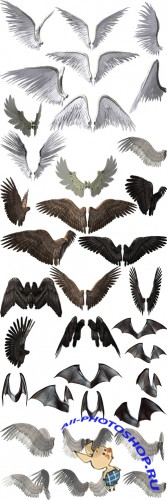 Cliparts - Big Collection Wings