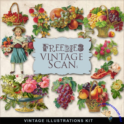 Scrap-kit - Berries Vintage Illustration