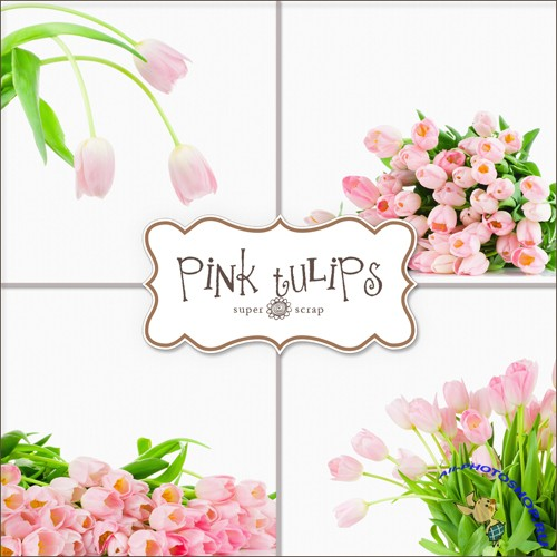 Backgrounds - Pink Tulips