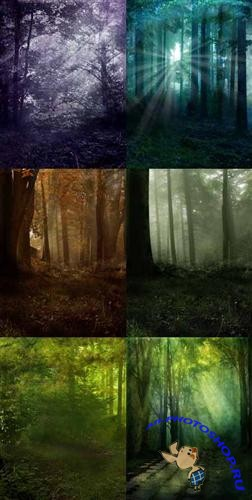 Magic grove backgrounds