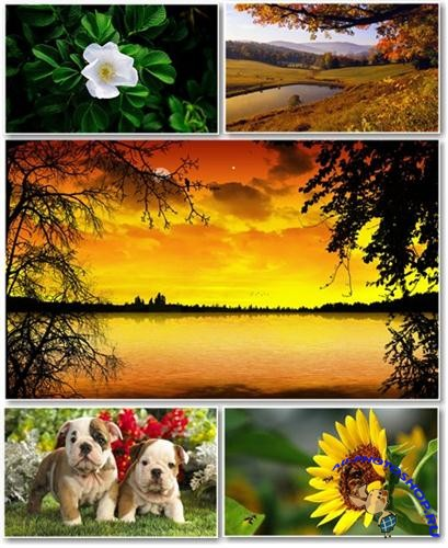 Best HD Wallpapers Pack №205