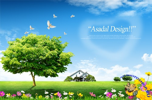 Flowers, birds, trees, nature PSD