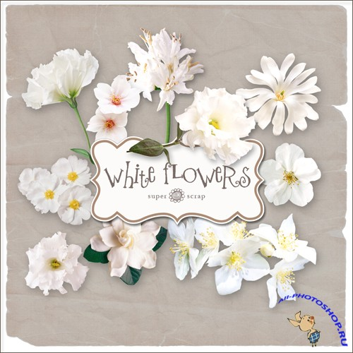 Scrap-kit - White Flowers Set