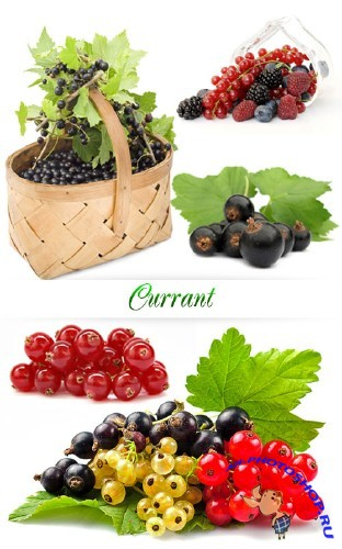 Stock Photo: Currant | Смородина