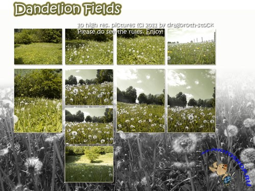 Stock Photo - Dandelion Fields