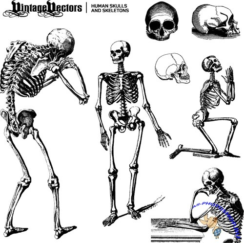 Human Skulls and Skeletons Vector Set