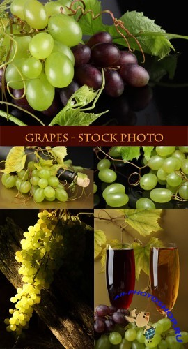 Grapes - Stock Photo 2 | Виноград - сток фото