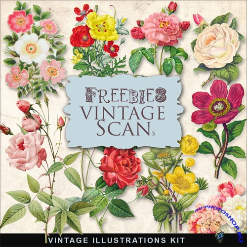 Scrap-kit - Vintage Flowers Illustrations #7