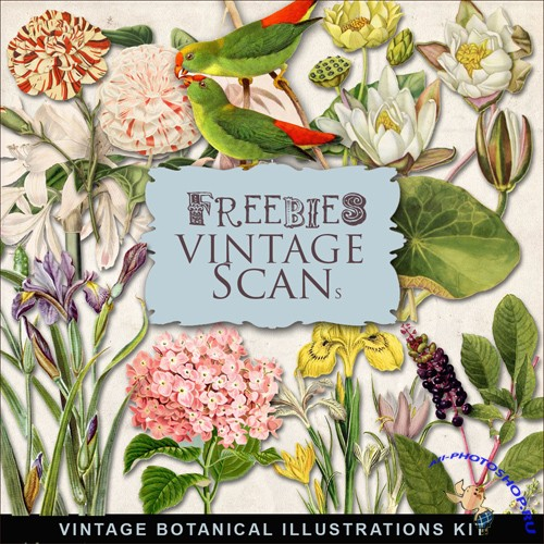 Scrap-kit - Vintage Botanical Illustrations #3
