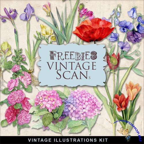 Scrap-kit - Vintage Flowers Illustrations #11