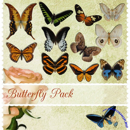 PNG Clipart - Butterfly Pack