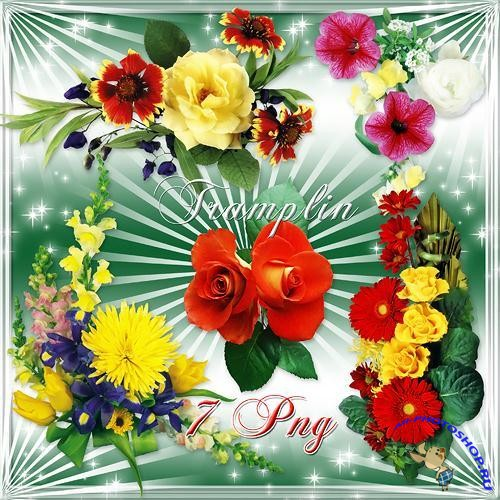 PNG Clipart - High Quality Flowers