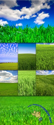 Green Field Cliparts