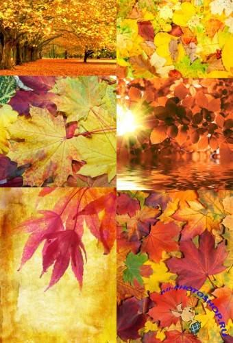 Autumn leaves texture backgrounds