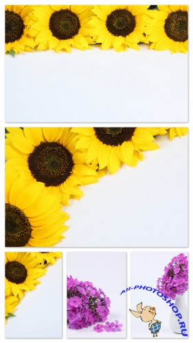 Flower on White Backgrounds