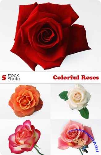 Photos - Colorful Roses