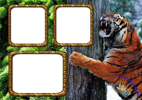 Photo Frame - Evil Tiger