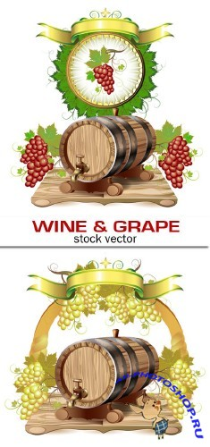 Wine & grape vector