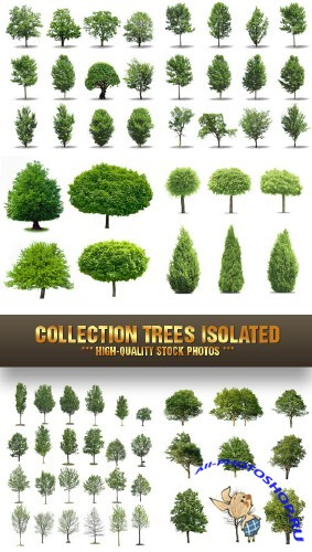 Stock Photo - Collection Trees Isolated