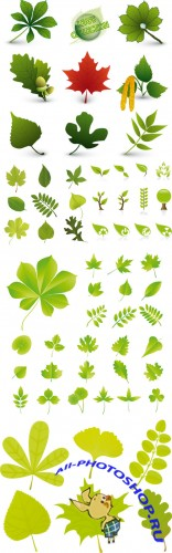 Various Forms of Leaf Vector