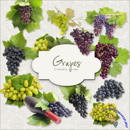 Scrap-kit - Grapes #1