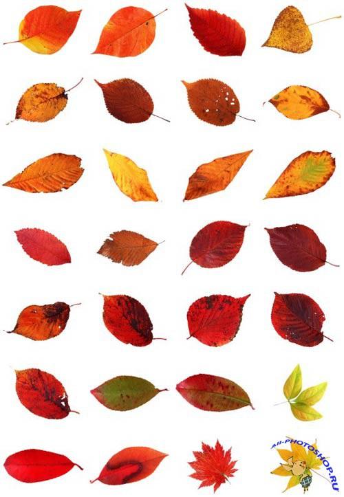 Шаблоны пестрые осенние листья