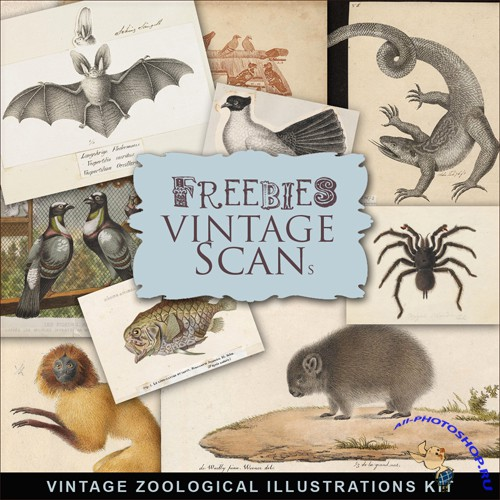 Scrap-kit - Vintage Zoological Illustrations #2