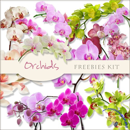 Scrap-kit - Orchids Images #1