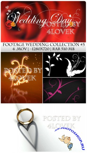 Footage Wedding Collection 5