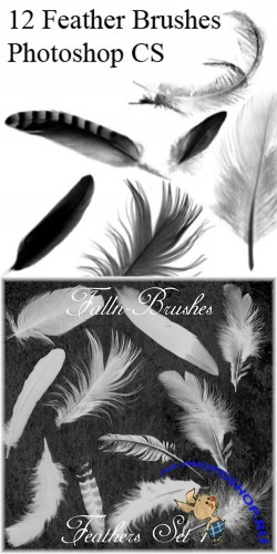 Feathers Brushes Set 1,2