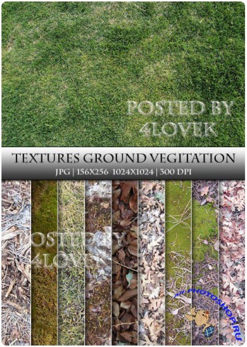 Textures - GroundVegitation