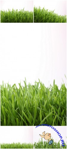 Photo Cliparts - Green grass