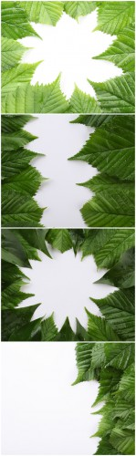 Photo Cliparts - Composition of green leaves