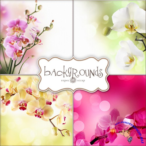 Textures - Orchids Backgrounds