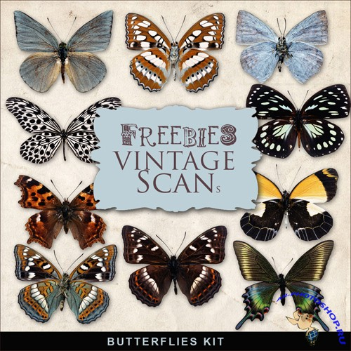 Scrap-kit - Butterflies Set #2