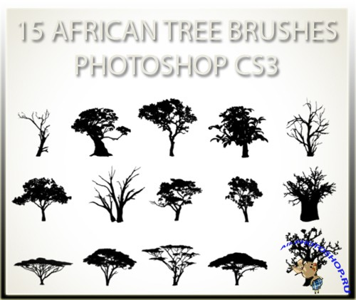 15 African Tree Brushes