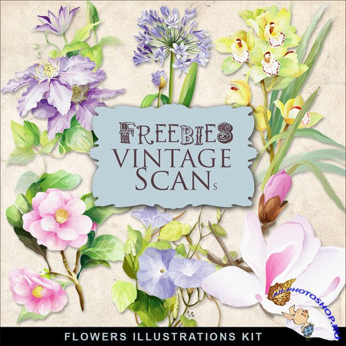 Scrap-kit - Vintage Flowers Illustrations #12