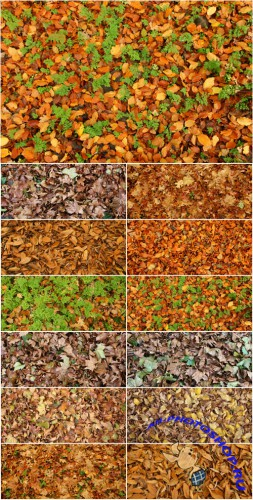 Autumn - Leaves & Grass Textures