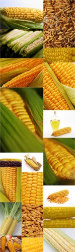 Photo Cliparts - Corn