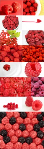 Photo Cliparts - Raspberry