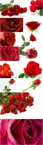 Photo Cliparts - Roses